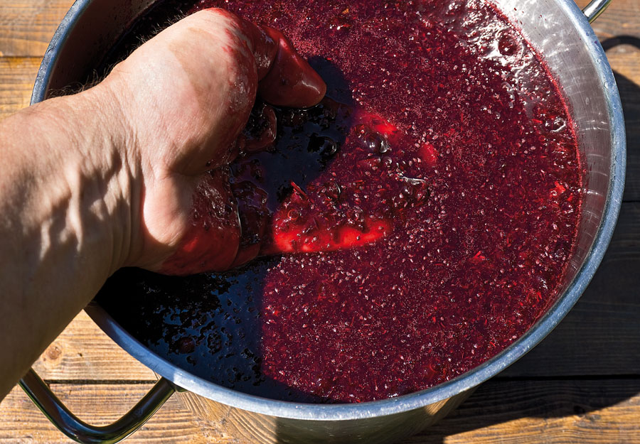 Вино из смородины черной в домашних условиях простой рецепт