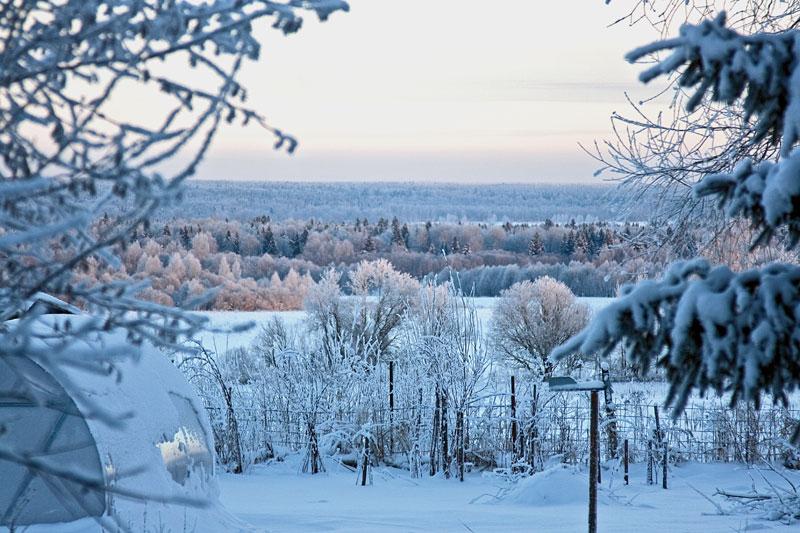морозное утро на даче