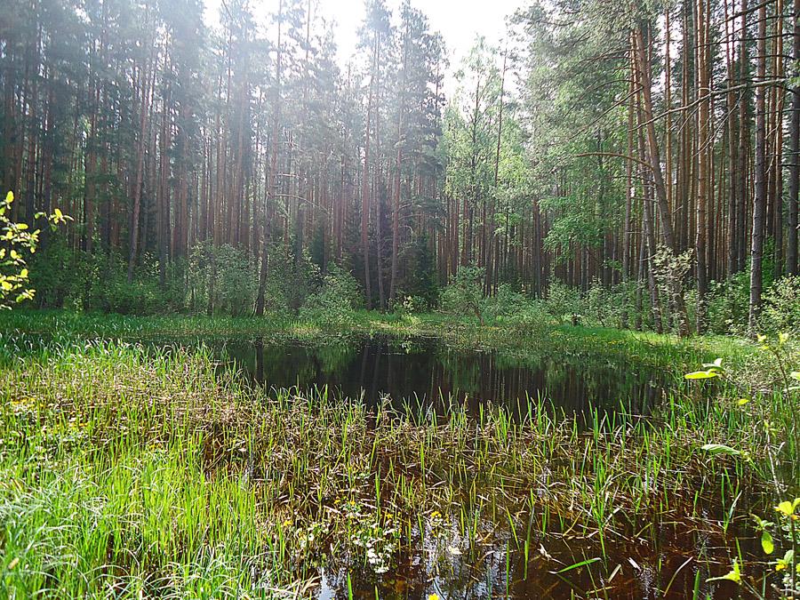 болотце у Волго