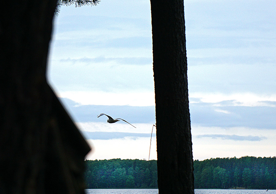 чайки над Волго